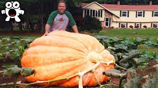 The Biggest Fruit & Vegetables Ever Created