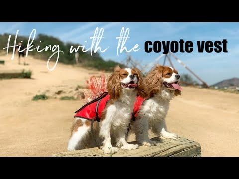 first-impressions-of-the-coyote-vest-on-an-off-leash-hike