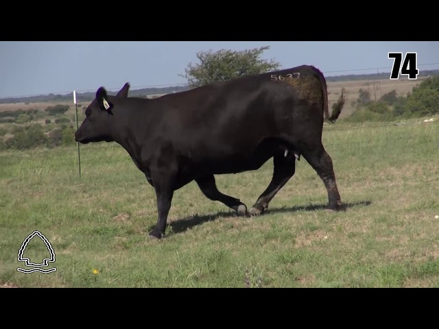 Pearcy Angus Ranch Lot 74