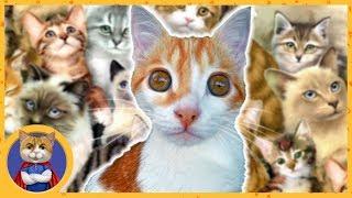 видео Домик для кошки: как сделать и на что обратить внимание