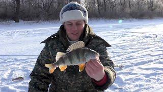 ОКУНЬ на безмотылку в феврале 2020 Зимняя рыбалка в затоне Иртыша Павлодарская область