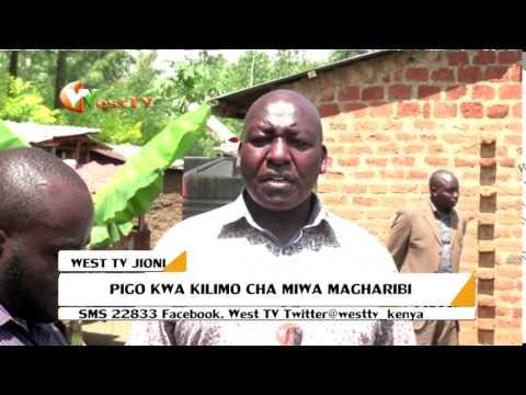Wakulima wa Miwa Magharibi wapata nafuu kwa ufugaji