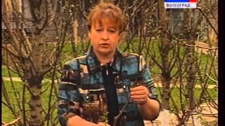 Об особенностях посадки плодово-ягодных и декоративных растений.(Об особенностях посадки плодово-ягодных и декоративных растений. Садовый инструмент: плоскорез