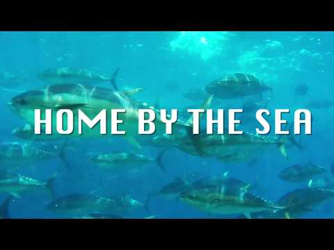Home By The Sea -Can Fisheries And Wind Farms Co-exist?