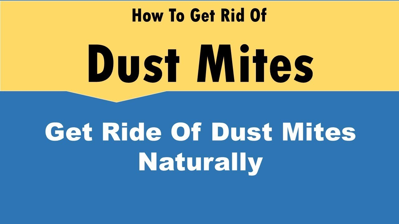 Get Rid Of Dust Mites Naturally
