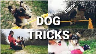 DOG TRICKS by Elinor & Narnia the shelties ♡