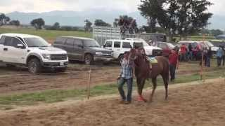 carreras de caballos san pablo huixtepec carril san Carlos 11 de Julio de 2015