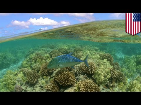 Largest protected area in the world: marine national monument of Hawaii to be expanded - TomoNews