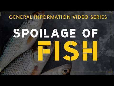 Spoilage Of Fish | General Information Video Series