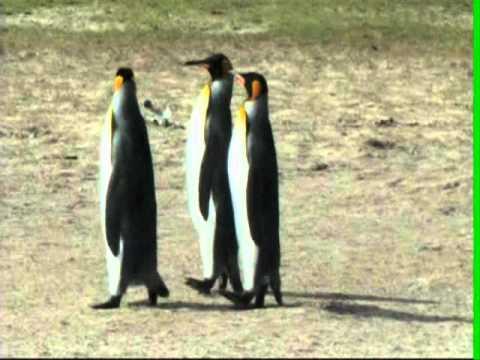 Sei in Deinem Element. Ein Pinguin-Gedicht von Phil Humor