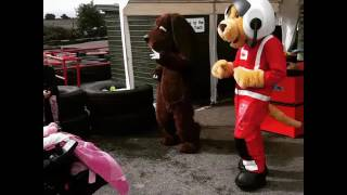 Diddles the dancing dog meets Midlands Air Ambulance service mascot in the ultimate dance off!(4)