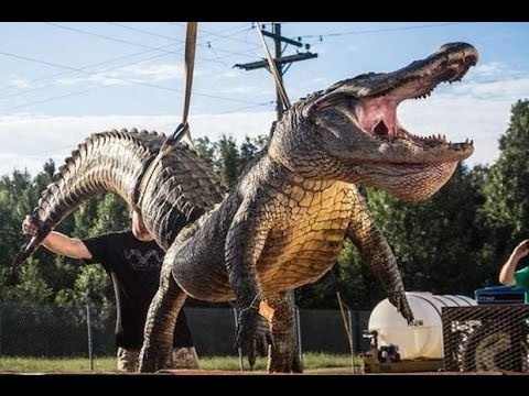 World S Top 5 Largest Crocodiles Ever Recorded Youtube