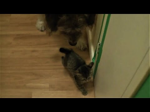 Funny 9 Week Old Kittens Keep Escaping