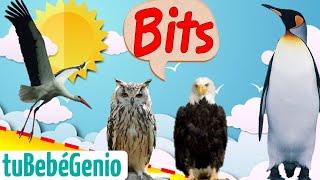 Sonidos de las aves | Bits de inteligencia para bebes y niños 0 7años Enseñando a leer