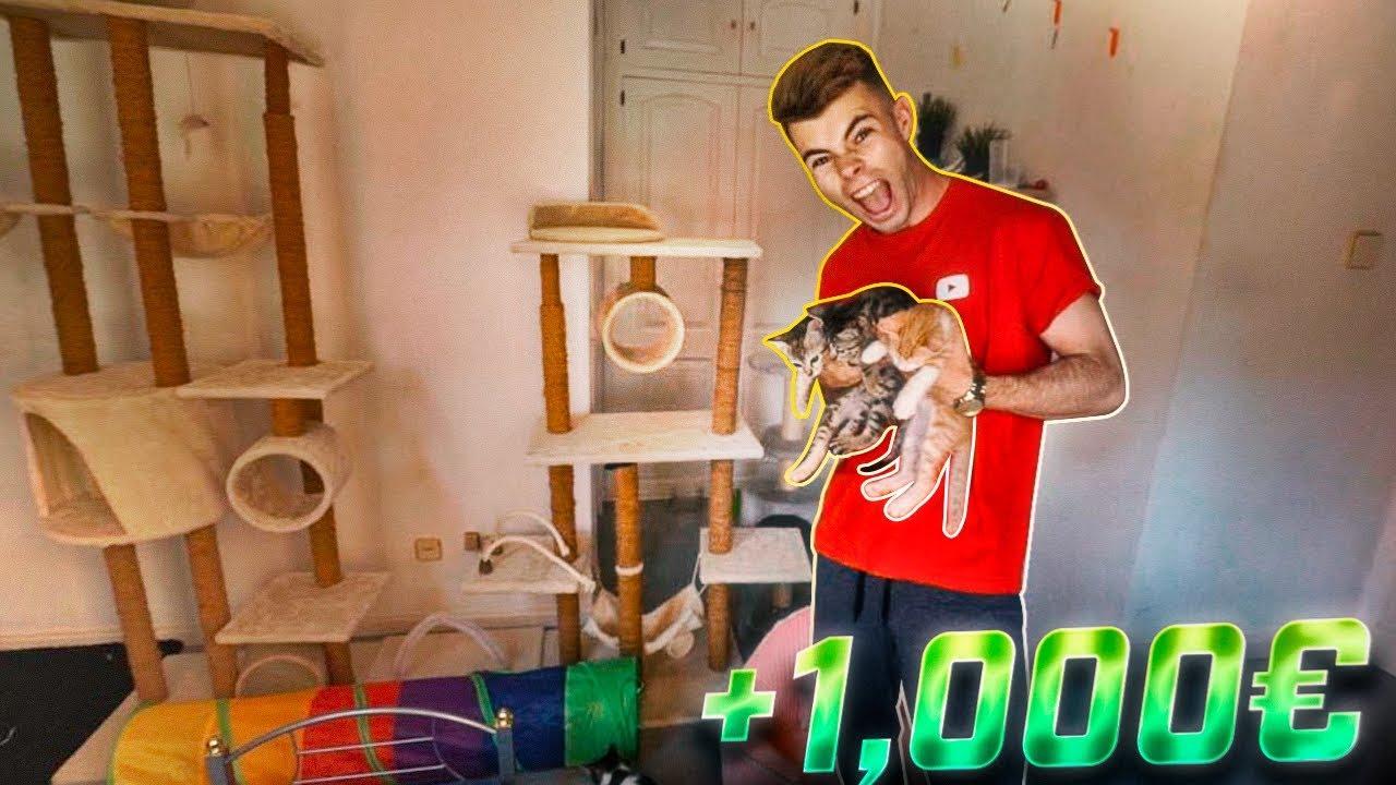 creamos-una-habitacin-de-lujo-para-nuestros-gatos-pequeos-1-000-salva