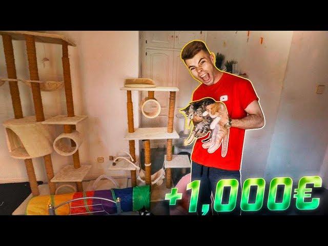CREAMOS una HABITACIÓN de LUJO para NUESTROS GATOS PEQUEÑOS (+1.000€) [Salva]
