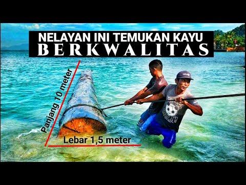 Nelayan Ini Temukan Kayu Berkualitas Tinggi Dan Mahal