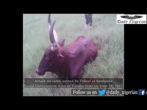 Attacks on Cattle owned by Fulani in Sardauna LGA, Taraba State, Nigeria - DN21062017