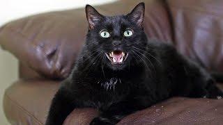 N2 the Talking Cat Music Videos Originals - Full