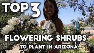 Top 3 Flowering Shrubs to Plant in Arizona