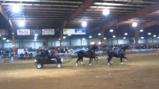 Dutch Harness Horse Four in Hand