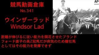 【競馬】ウインザーラッド Windsor Lad【No 341】