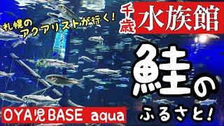 【日本淡水魚】サケのふるさと千歳水族館にアクアリストが行く!!!