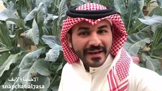 سعودي يحول سطح بيته الى مزرعة بواسطة الزراعة المائية !! | الاحساء لايف