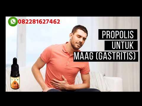 082281627462 WA propolis untuk maag, propolis