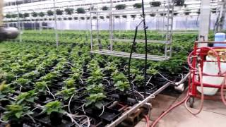 Greenhouse Horticulture USA