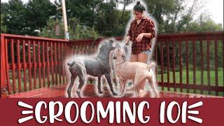 Cane Corso Grooming Routine (Nail Trimming, Brushing, Bathing)