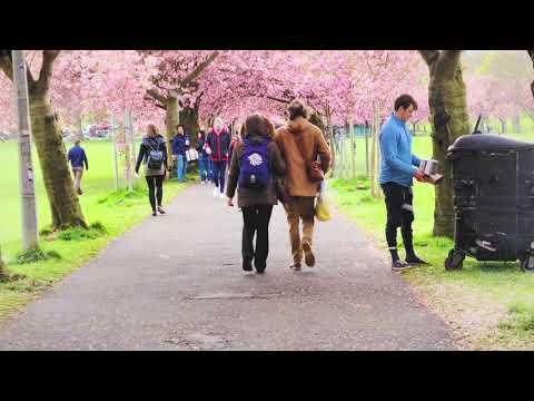 4K Scotland - Edinburgh - 17/5/2021 Cherry Blossom Tracking