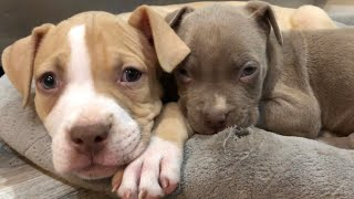The cutest and cuddliest puppies in the world