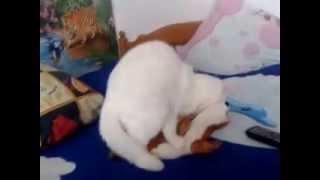 Белая кошка рулит