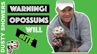 Warning! Opossums WILL Bite, I