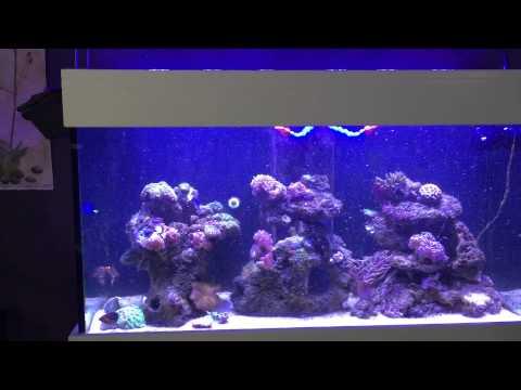 Jebao RW-15 in Aqua One Aqua Reef 400L from Fish Street.