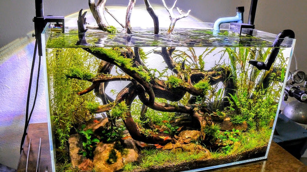 Eradicate Algae From Your NEW Aquascape | Aquascaping ...
