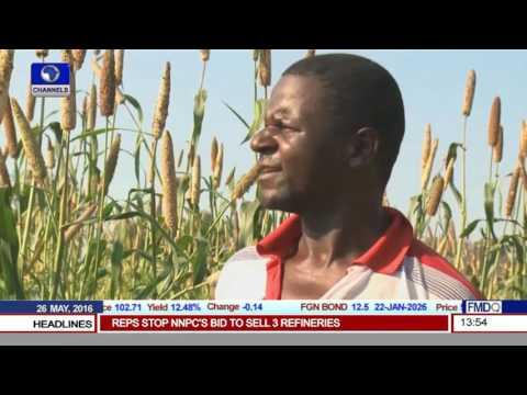 El Nino Induced Drought Causes Maize Shortfalls In Zimbabwe