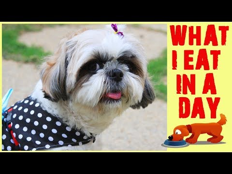 Shih Tzu's Diet | What Flurry Eats In A Day | Meal Plan For Shih Tzu | Home Cooked Meal For Dogs🐹🍚
