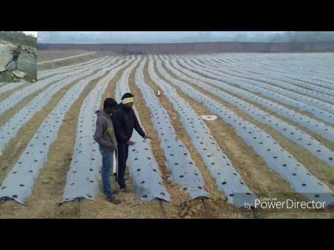 New modern agricultural technology || Farming || Amazing technology Compilation in india