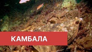 Приморский край Морская рыбалка Камбала