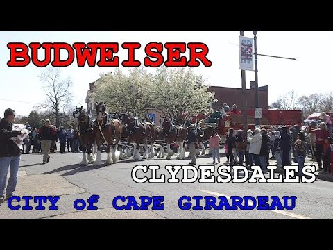 Budweiser Clydesdales - City of Cape Girardeau, MO