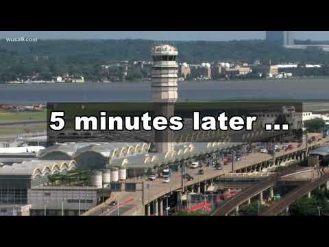 Turtle on the tarmac causes flight delay at Reagan National Airport