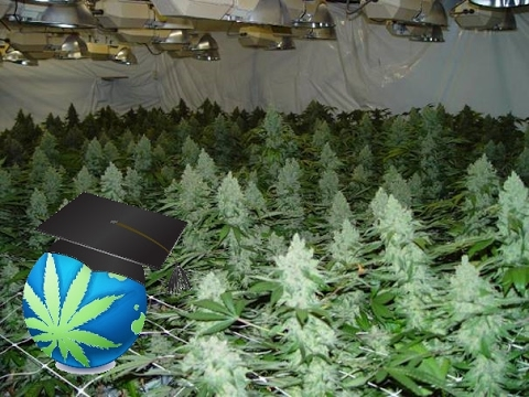 How To START A Cannabis Grow - Very First Steps