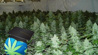 How To START A Legal, Personal Cannabis Grow - Very FIRST Steps