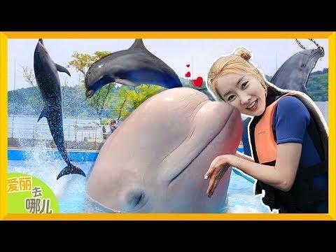 [愛麗去哪兒] 騎著海豚一起游泳!和白鯨比賽打水仗的愛麗會有勝算嗎?| 愛麗和故事 EllieAndStory