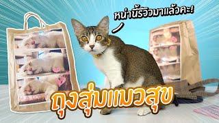 หน่านิ้รีวิว-ถุงสุ่มแมวแสนสุข-หน่านิ้อยากสุ่มจังค่ะ-【-cat-happy-bag-】