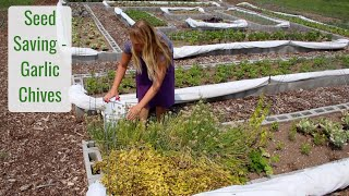 Seed Saving, Garlic Chives, So Easy! - Life in a Tiny House called Fy Nyth