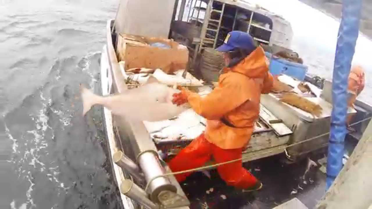 Southeast alaska halibut fishing spring 2015 youtube for Alaska out of state fishing license