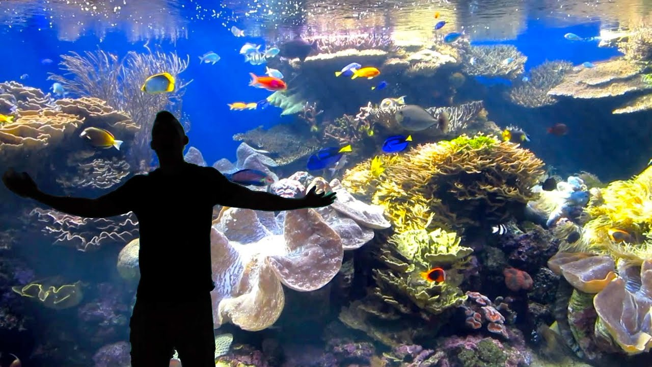 Ultimate Reef Aquarium In Hawaii Life After College Ep 299 Youtube